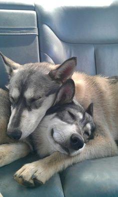 Cuddling..