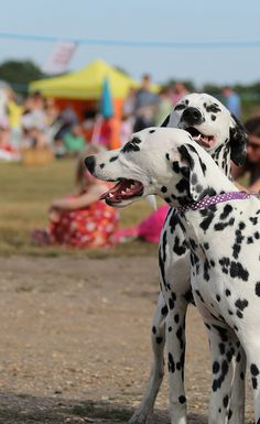 Lily and her sister Jess at the Wimbledon Common Stables open day and Dog Show.