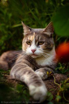 Serious Cat by bagirushka
