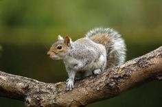 Close Encounter of The Squirrel Kind! / myLot