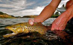 Love the German Fishing Report, Missouri River, Fly Shop, Fly Fishing, Montana, German, Bucket, Sports, Deutsch