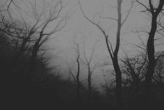 Dark Landscape, Different Aesthetics, Dark Forest, Solitude, Mother Nature, Mists, Places To Go, Black And White, Queen Sophia