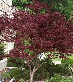 Pick the trees you want to use in your Utah County landscape design Deciduous Trees, Trees And Shrubs, Landscaping Plants, Landscaping Ideas, Backyard Ideas, Tree Borders, Trees For Front Yard, Home Flowers, Garden Landscape Design
