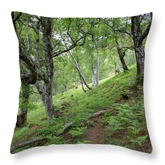 New, fresh forest in scottish Highland Spring Forest, Nature Artists, Nature Artwork, Pin Pin, Pillow Sale, Poufs, Travel Photographer, Botanical Art, Art Market