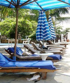 Nyali Beach Hotel in Mombasa, Coast Mombasa Kenya, Beach Hotels, Holiday Destinations, Outdoor Furniture, Outdoor Decor, Resorts, Coastal, Africa, Patio
