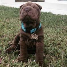 This little dude who is very proud of his wrinkles. | 42 Of The Most Important Puppies Of All Time