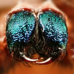 Beetle, Insects, Animals, Sleeve, June Bug, Manga, Animales, Animaux, Beetles