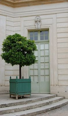 love the door color and the potted tree