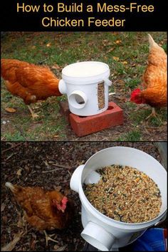 Keep Your Backyard and Your Chicken Coop Clean With This DIY Mess-Free Bucket Chicken Feeder #chickenhouse Chicken Barn, Best Chicken Coop, Backyard Chicken Coops, Chicken Coop Plans, Building A Chicken Coop, Chickens Backyard, Chicken Life, Free Chickens, Keeping Chickens