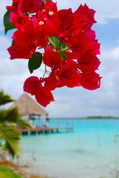 Beautiful Nature Wallpaper, Beautiful Landscapes, Beautiful Flowers, Beautiful Places, Flower Phone Wallpaper, Summer Wallpaper, Flower Aesthetic, Tropical Beaches, Autumn Photography