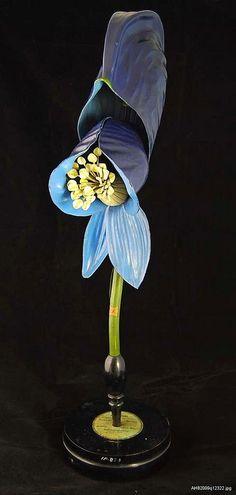 Botanical model: Monkshood | Flickr - Photo Sharing!