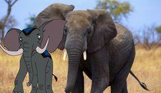 African Bush Elephant   The Parody Wiki   Fandom