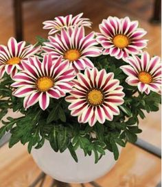 100 pcs / bag,Gazania seeds, potted seed, flower seed, variety complete, the budding rate 95%, (Mixed colors), garden pot plant #>=#>=#>=#>=#> Click on the pin to check out discount price, color, size, shipping, etc. Save and like it!