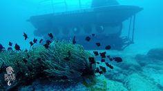 Blue Safari Submarine