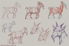How to draw goats! Specifically pygmy goats. ;]