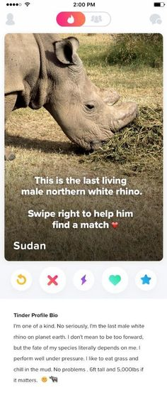 He's The Last Male Northern White Rhino On Earth, And He's Now On Tinder | The Huffington Post