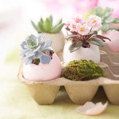 Eierschale Blumentopf Bastelideen zu Ostern