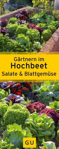 """Gärtnern im Hochbeet: Wir verraten euch alles, was ihr über das Pflanzen von Salaten und Blattgemüse im Hochbeet wissen müsst. Alle Info's findet ihr in der Leseprobe zum Buch """"Hoch das Beet!"""".⎜GU"""