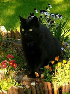 Black cat just like Artie Cool Cats, I Love Cats, Crazy Cats, Beautiful Cats, Animals Beautiful, Cute Animals, Cat Paws, Dog Cat, Gatos Cool