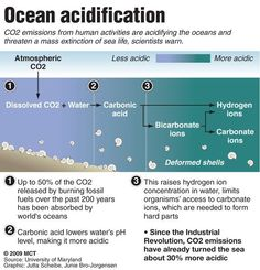 Ocean acidification is an inevitable byproduct of increasing levels of CO2 in the atmosphere. Current CO2 levels are so high that even if emissions were drastically cut tomorrow, some more acidification would still occur. A doubling of CO2 levels in the atmosphere is possible within the next 50 years, which, if it happens, could bring about extinction events of a magnitude the Earth hasn't seen for 65 million years.