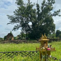 """Buzzy Bee Bike Fatbike E-bike on Instagram: """"A lot to see when cycling around Chiang Mai. The rice fields smooth and green. New statues at the temple. Taking the child in the sidecar.…"""""""