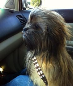 Chewbacca the dog laughs-and-smiles