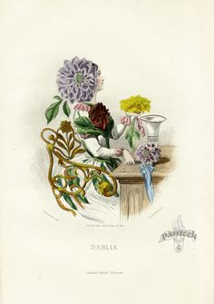 Dahlia fairy - JJ Grandville