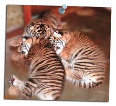 Tiger cubs at the Honolulu Zoo! Baby Animals Pictures, Cute Baby Animals, Honolulu Zoo, Tiger Cubs, Cute Babies, Hawaii, Kitty, Fan, Board