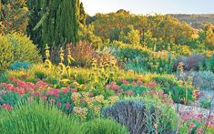 A French plantsman who loves a drought is expanding our plant palette, says Tim   Richardson