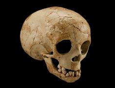 The skull of a two-year-old Neanderthal child: 'Dederiyeh 2' (Syria); between 70,000 and 50,000 years old. Smithsonian Institution.