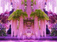 Wisteria in Japan600 x 450131.6KBinterestingplac.es