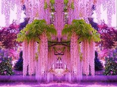 Purple wisteria , Japan