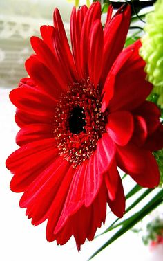 YOUTUBE CHANNEL:https://www.youtube.com/user/TheFederic777 FACEBOOK: https://www.facebook.com/GardenFlowers2015 http://tips-to-help-you-the-gerberas-2.blogspot.com/ #Video #gerberas #flowers