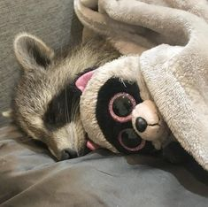 A place for really cute pictures and videos! Rocky Raccoon, Baby Raccoon, Racoon, Cute Funny Animals, Cute Baby Animals, Funny Cute, Animals And Pets, Strange Animals, Beautiful Creatures