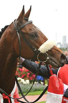 Dunaden is the first horse to win Hong Kong Vase after winning the Melbourne Cup.