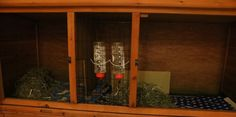 Setting up your guinea pigs new cage is important, before you bring them home. In this article I go through what to think about with the layout and where they have enough space to move around. I describe and show my own set up. Guinea Pig Hutch, Guinea Pig Care, Guinea Pigs, Bring Them Home, Cage, Layout, Page Layout