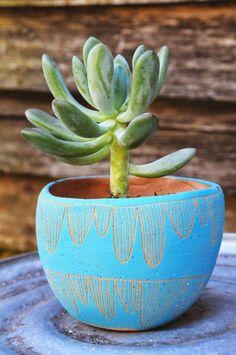 grüne zimmerpflanzen bilder sukkulenten blumengefäße