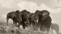 Chobe National Park - Chobe Game Lodge - Botswana