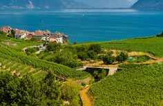 © LT/Laurent Kaczor - Vignobles de Lavaux MyLausanne Blog Lausanne Lausanne, Golf Courses, Blog, Travel, Future Tense, Switzerland, Blogging, Viajes, Traveling