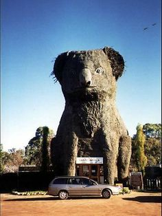 Giant Koala. Dadswells Bridge, VIC, Australia
