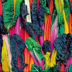 five color swiss chard from seed savers exchange.  Seed Savers Exchange is a non-profit organization dedicated to saving and sharing heirloom seeds.