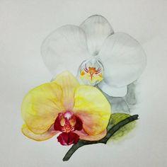 Día 12: mi flor preferida. En realidad la peonía me gusta mas porque las orquídeas las tengo muy vistas ya que tengo unas cuantas en casa, aunque son muy bonitas también, pero hacer una peonía a acuarela me parecía un poco aburrido. Asi que estas son las orquídeas que de momento han florecido de las que hay en casa.  #30daydrawingchallenge #30diasdibujando #acuarela #watercolor #orchid #orquidea #blanco #amarillo #white #yellow #flores #flowers #illustration #ilustración #draw #dibujo…