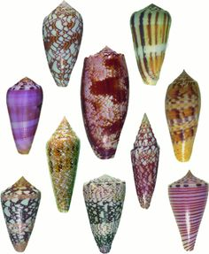 THE GLORY OF THE SEA ~ SEASHELLS OF  DIFFERENT SHAPES & HUES!
