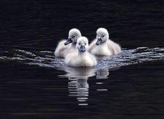 """Three's a crowd"""
