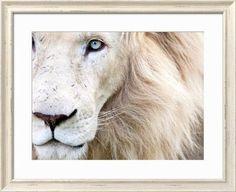 www.art.com products p18688913688-sa-i7139203 karine-aigner-full-frame-close-up-portrait-of-a-male-white-lion-with-blue-eyes-south-africa.htm?sOrig=CAT&sOrigID=0&dimVals=0&ui=E791DC79BAA048099C3E58CB6018CB98&RFID=065427&utm_source=Pinterest&utm_medium=display&utm_campaign=test_ads&pp=0