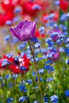 vivid flower field