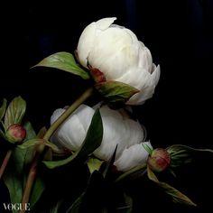 Cold Porcelain Flowers, Plants, Painting, Art, Art Background, Painting Art, Kunst, Paintings, Plant