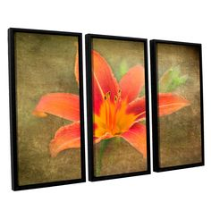 ArtWall Antonio Raggio's 'Flowers in Focus 4' 3-piece Floater Framed Set