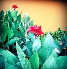 - Flowers on the road 3.0. . . . - Flores en el Camino 3 .  #flores #flowers #sendero  #road #naturaleza #nature #fotografias #phothography #photographyeveryday #photographyislife #samsungs5  #malecón2000 #guayaquil #guayaquilesmidestino #floweroftheday #flowerlovers #plantas #plants #phonephotography #samsungs4 #flowerlovers #belleza #redflower #beatifull #naturephotography