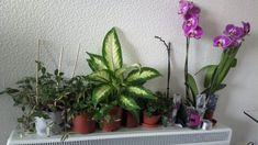 Všetci vieme, čo dokáže Savo v domácnosti: Toto je geniálny trik skúsených záhradkárov, prečo ho nedáte z ruky ani v záhrade! Flowers, Plants, Ale, Ale Beer, Flora, Plant, Royal Icing Flowers, Ales, Flower